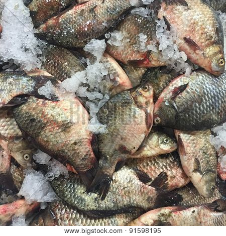 Crucian Carp Fish On Ice At The Market As Background