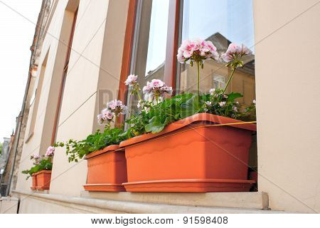 Blooming Flowers On The Windowsill At Home