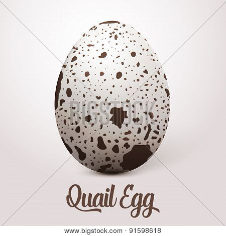 Vector realistic white egg with spots. On light background with soft shadow. 3D Quail Egg.