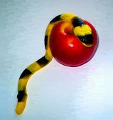 stock photo of adam eve  - Jelly serpent crawling over an apple  - JPG