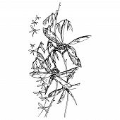 pic of dragonflies  - Dragonflies - JPG