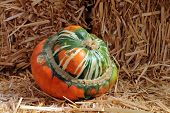 stock photo of turban  - Turban Squash with hay for Fall decoration - JPG