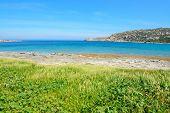 image of vegetation  - green vegetation by the sea in Gallura Sardinia - JPG
