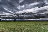 stock photo of thunder-storm  - Storm Clouds before rainy and field meadow - JPG