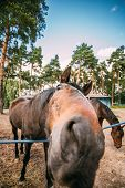 picture of brown horse  - Funny Brown Horse Photographed A Wide Angle Lens - JPG