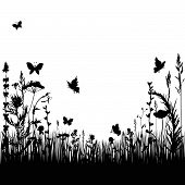 picture of biodiversity  - silhouettes grass and twigs of plants with butterflies - JPG