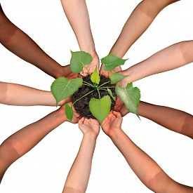 stock photo of diversity  - Community collaboration and cooperation concept and social crowdfunding investment symbol as a group of diverse hands organized in a circular formation nurturing a growing sapling tree as people coming together for success - JPG