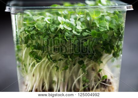 Fresh Cress Salad On Plastic Container