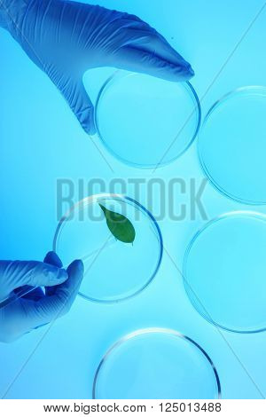 Scientist working with Petri dishes in laboratory