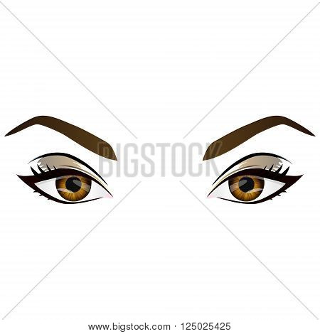 Realistic cartoon vector female brown eyes and eyebrows and fashion make up. Hazel eyes and brows design element body parts isolated on white background. Eyes close up