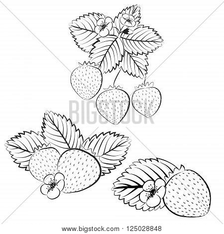 Strawberry plant and berries outline set. Collection of contour strawberries. Contour vector strawberries isolated on white background. Fruit and berries design element