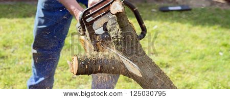 Man with chainsaw cutting the tree in the garden