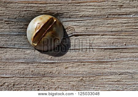 Macro of a rusty screw head on strongly weathered wood. Naturally aged by the elements. The color is partially worn away and shows the fringed structure and the  grain of the wood.