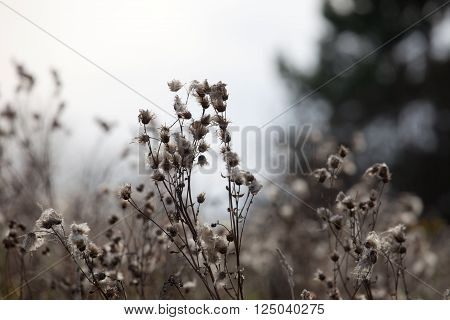 Autumn grass on a wildflower background soft focus ** Note: Shallow depth of field