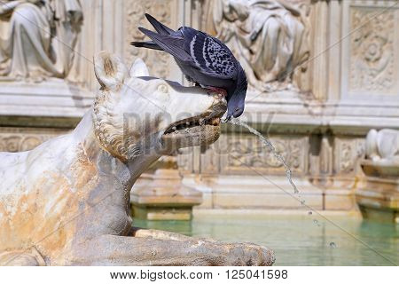 SIENA, ITALY - MARCH 12, 2016: Fountain of joy - a medieval marble fountain in Siena. Panel Fonte Gaia, Piazza del Campo, Siena, Tuscany, Italy