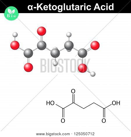 alpha-Ketoglutaric acid molecule oxoglutarate structural chemical formula and model 2d & 3d vector isolated on white background eps 8