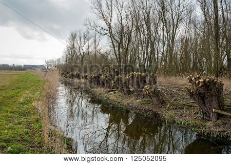 Recently pollarded willow trees on the edge of a creek. The pruned branches are ready for transport. It is a cloudy day at the end of the winter.