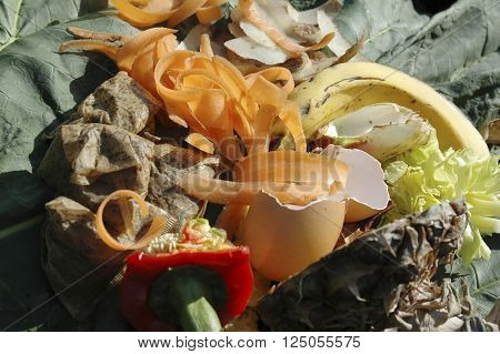 Raw vegetable and fruit Kitchen waste on a garden compost heap for recycling.