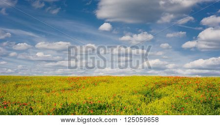Poppy and Oilseed rape plant field with cloudy blue sky, Czech countryside.