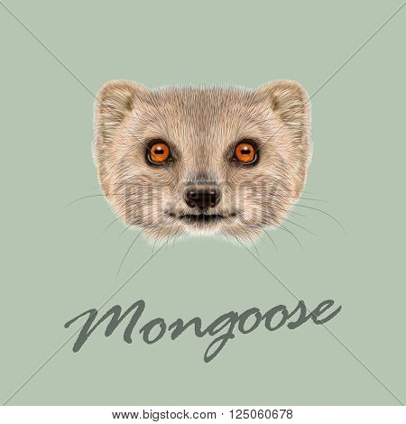 Cute face of grey Mongoose with orange eyes on green background.
