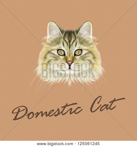 Cute face of brown tabby cat on coffee color background.