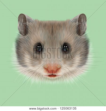 Cute grey face of domestic Hamster on green background.