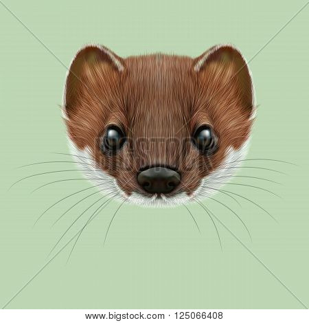 Cute face of red stoat on green background.