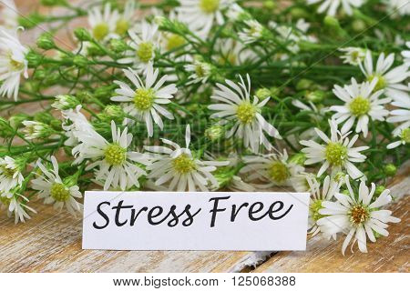 Stress free card with fresh chamomile flowers on rustic wooden surface ** Note: Visible grain at 100%, best at smaller sizes