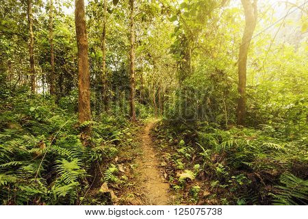 Hiking trail in lush green forest with sunlight shinning through the trees.