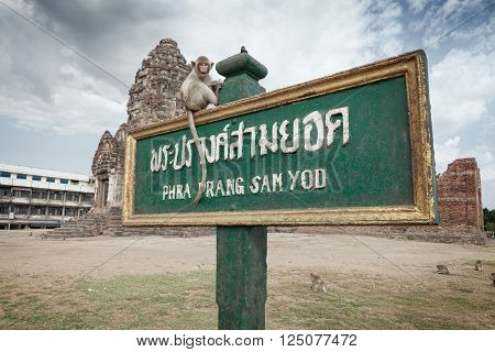 monkey old temple phra prang sam yod wat  in Lopburi, Thailand
