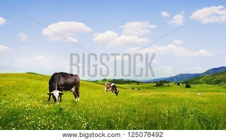 panoramic view of nice green hill with sows on blue sky background