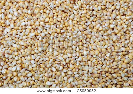 Placer of yellow corn isolated on white background