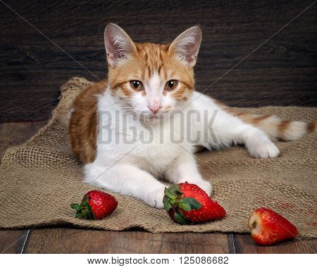 Cat and strawberry. Cat playing strawberries. The cat is white with red