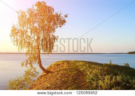 Summer picturesque landscape - lonely spreading birch standing on the steep cliff at Irtyash Lake in Southern Urals Russia