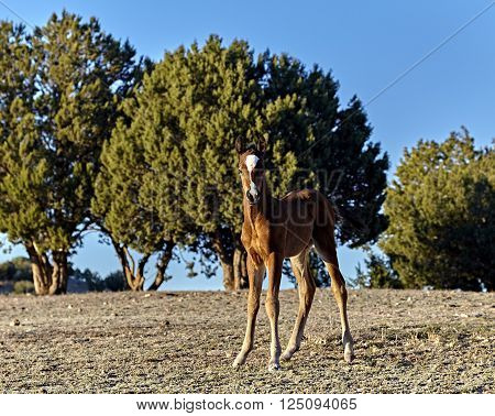 Baby Horse Standing In A Field