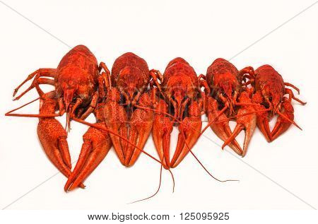 juicy boiled crayfish isolated lined up in size. unusual view.