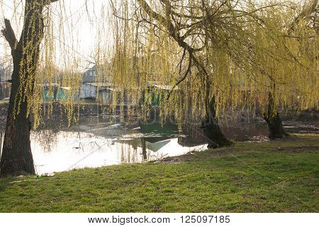 weeping willow trees reflected on a lake