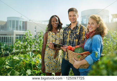 Group of gardeners tending to organic crops and picking up a bountiful basket full of fresh produce from their small business