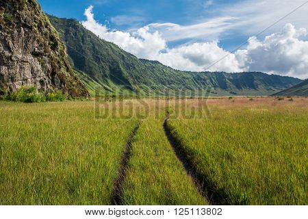 Grassland at Mount Bromo volcano caldera, Java, Indonesia