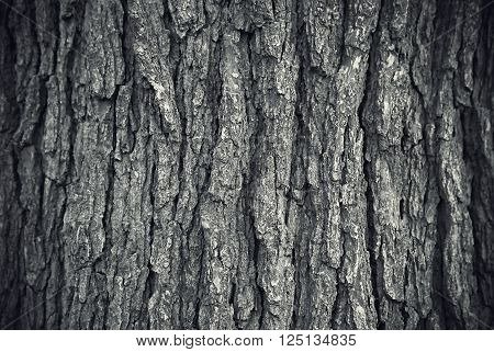 Close up texture of grey tree trunk