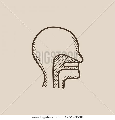 Human head with ear, nose, throat system sketch icon.