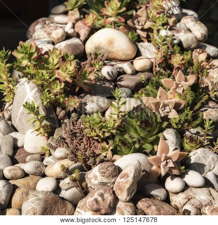 Different succulents on stones in garden, daylight