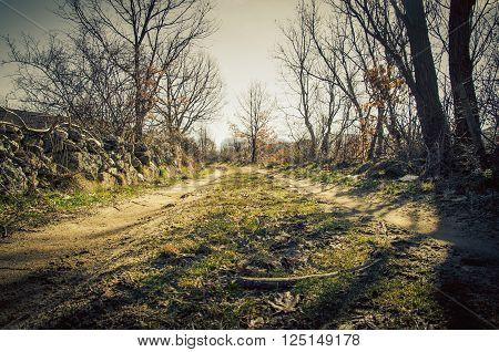 Leafless trees near rural road in sunlight. vignette effect