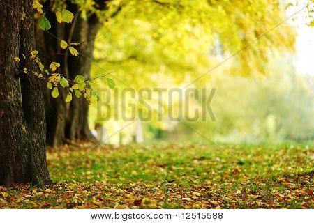 Herbst-park