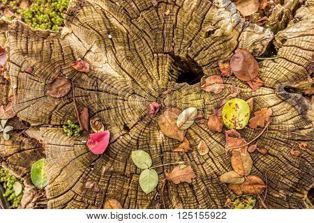 magical tree trunk with colorful scattered leaves