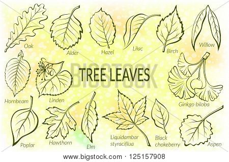Pictograms Set, Tree Leaves, Oak, Willow, Liquidambar, Hawthorn, Poplar, Aspen, Hazel, Ginkgo Biloba, Elm, Birch, Alder, Linden, Hornbeam, Chokeberry and Lilac. Vector