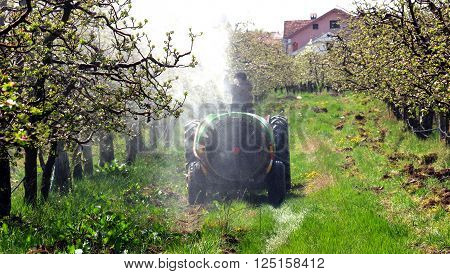 Picture of a spraying apple orchard in spring