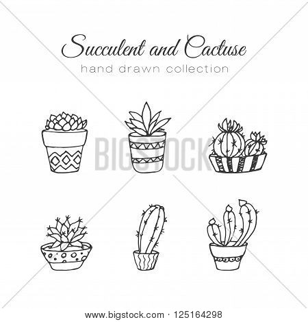 Cactus illustration. Vector succulent and cacti hand drawn set. In door plants in pots. Exotic mexican flora design.