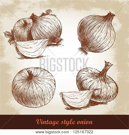 Onion hand drawn set. Vintage retro background with hand drawn sketch onions. Herbs and spices vector illustration