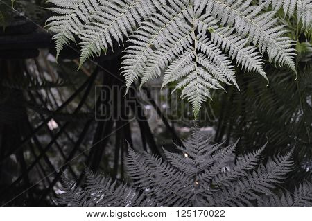 Fern fronds reflecting in the clear water